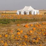 Pumpkin Patch and Stand